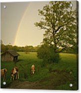 A Double Rainbow Arcs Over A Field Acrylic Print by Carsten Peter
