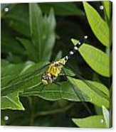 A Dragonfly Resting On A Leaf Acrylic Print by George Grall