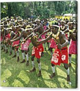 A Group Of New Guinean Men Performing Acrylic Print by Klaus Nigge