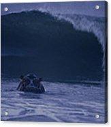 A Hippopotamus Surfs The Waves Acrylic Print by Michael Nichols