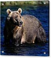 A Kodiak Brown Bear Wades In An Alaska Acrylic Print by George F. Mobley