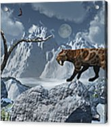 A Lone Sabre-toothed Tiger In A Cold Acrylic Print by Mark Stevenson