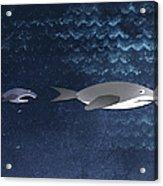 A Small Fish Chasing A Shark Acrylic Print by Jutta Kuss