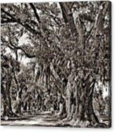 A Stroll Through Time Monochrome Acrylic Print by Steve Harrington