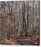 A Walk In The Woods Acrylic Print by Robert Margetts