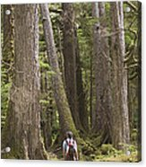 A Woman Walks In Old Growth Forest Acrylic Print by Taylor S. Kennedy