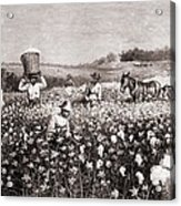 African Americans Picking Cotton Acrylic Print by Everett