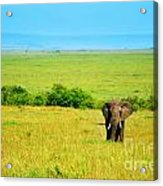 African Elephant In The Wild Acrylic Print by Anna Om