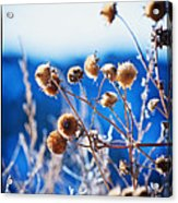 Against The  Blue Sky Acrylic Print by Lisa  Spencer