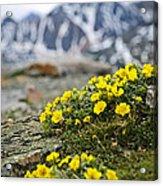 Alpine Meadow  Acrylic Print by Elena Elisseeva