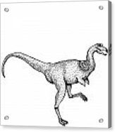 Alvarezsaurus - Dinosaur Acrylic Print by Karl Addison