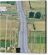 Amish Horse And Buggy On Country Road Acrylic Print by Jeremy Woodhouse