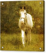 Andre On The Farm Acrylic Print by Trish Tritz