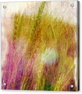 Another Field Of Dreams Acrylic Print by Judi Bagwell