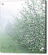 Apple Orchard Acrylic Print by Jeremy Walker