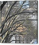 Arched Trees Acrylic Print by Kimberly Perry