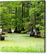 Arkansas Lake With Cypresses Acrylic Print by Carol Groenen