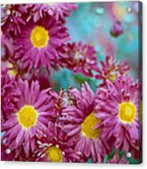 Asters Acrylic Print by Marcio Faustino