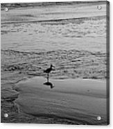 At Twilight In Black And White Acrylic Print by Suzanne Gaff