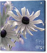 Attachement - S09at01 Acrylic Print by Variance Collections