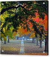 Autumn Canopy Acrylic Print by Lisa Phillips