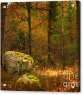 Autumn Forest Walk Acrylic Print by Lutz Baar
