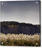 Autumn Grasses - North Carolina Autumn Scene Acrylic Print by Rob Travis