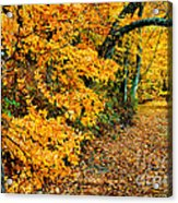 Autumn In Tennessee Acrylic Print by Cheryl Davis