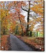 Autumn Leaves Acrylic Print by Harold Nuttall