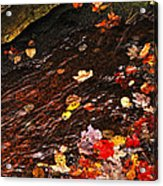 Autumn Leaves In River Acrylic Print by Elena Elisseeva