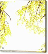 Autumn Leaves On Branch With Bridge In Background, Close-up Acrylic Print by Johner Images