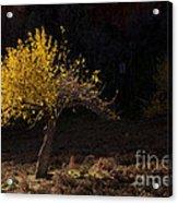 Autumn Light Acrylic Print by Mike  Dawson