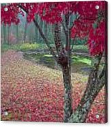 Autumn Red Acrylic Print by Rob Travis