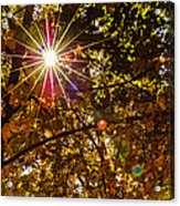 Autumn Sunburst Acrylic Print by Carolyn Marshall