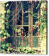Autumn Vines Across A Window Acrylic Print by Georgia Fowler