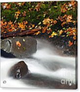 Balance Of The Seasons Acrylic Print by Mike  Dawson