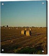 Bales In Peanut Field 13 Acrylic Print by Douglas Barnett
