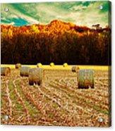 Bales Of Autumn Acrylic Print by Bill Tiepelman
