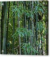 Bamboo Tree Acrylic Print by Athena Mckinzie