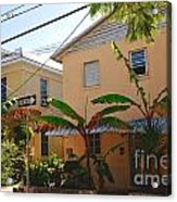 Banana Tree Lane In Key West Acrylic Print by Susanne Van Hulst
