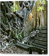Banyan Tree And Park Bench Acrylic Print by Dennis Clark