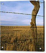 Barbed Wire Fence Along Dry Creek Road Acrylic Print by Gordon Wiltsie