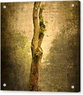 Bare Tree Acrylic Print by Svetlana Sewell