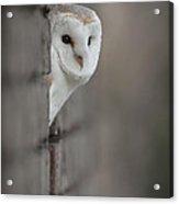 Barn Owl Acrylic Print by Andy Astbury