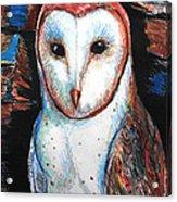 Barn Owl  Acrylic Print by Jon Baldwin  Art