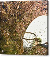 Basketball Hoop Acrylic Print by Andersen Ross