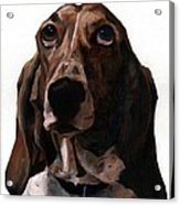 Basset Hound Named Coquette Acrylic Print by Thomas Weeks
