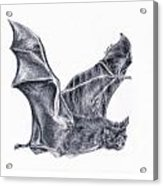Bat Acrylic Print by Lucy D