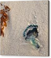 Beached Acrylic Print by Charles Warren