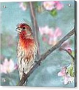 Beautiful Spring Acrylic Print by Betty LaRue